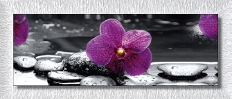 ORCHID IN BLACK - Bianca