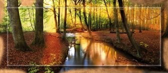 RIVER IN THE WOODS - Oro