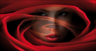 Face of Rose - Red