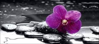 Orchid in Black